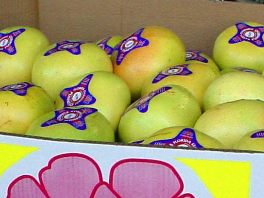 pack-fruit-1