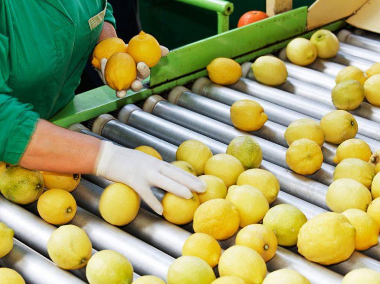 pack-fruit-2
