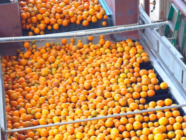 pack-fruit-3